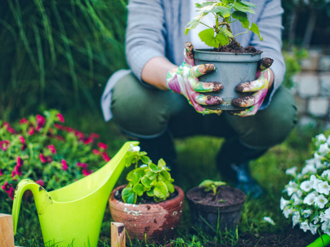 Image of a gardener holding a potted plant