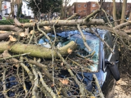 Image of a car trapped underneath a fallen tree.
