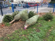 Image of dumped Christmas trees at Thornbury Park.