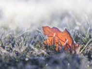 Leaf on grass on a frosty cold day