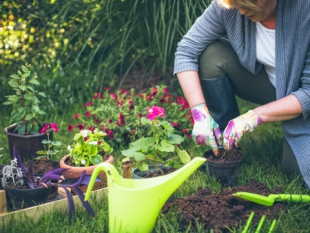 Save 10 % on council's garden waste service